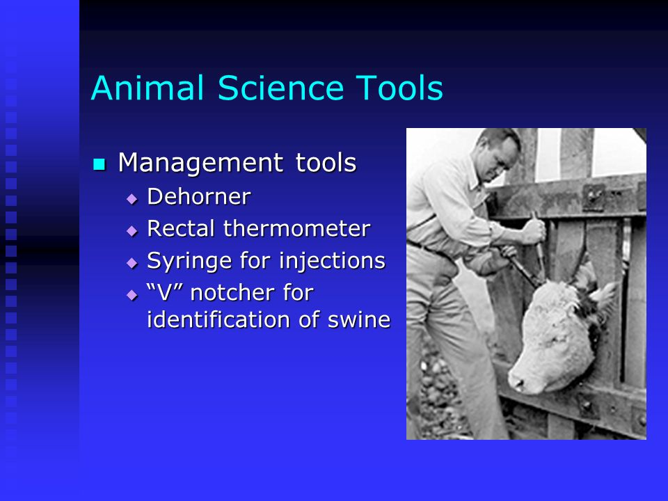 Animal Science Tools Management tools Dehorner Rectal thermometer