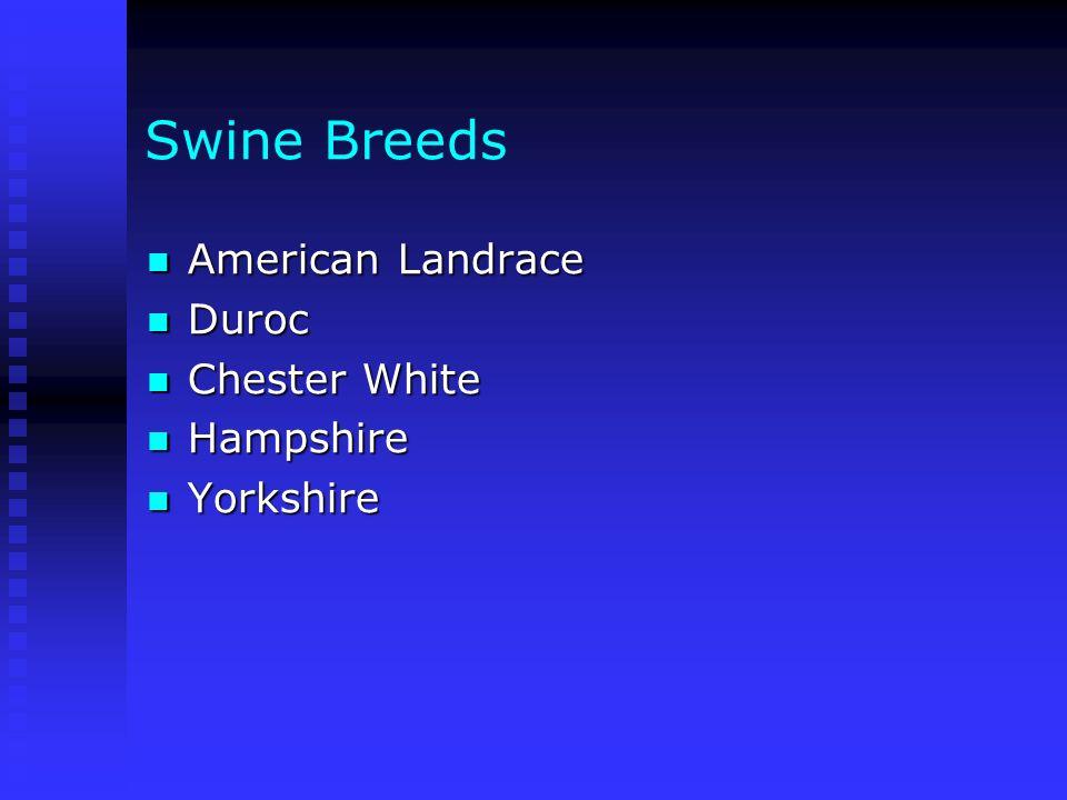 Swine Breeds American Landrace Duroc Chester White Hampshire Yorkshire