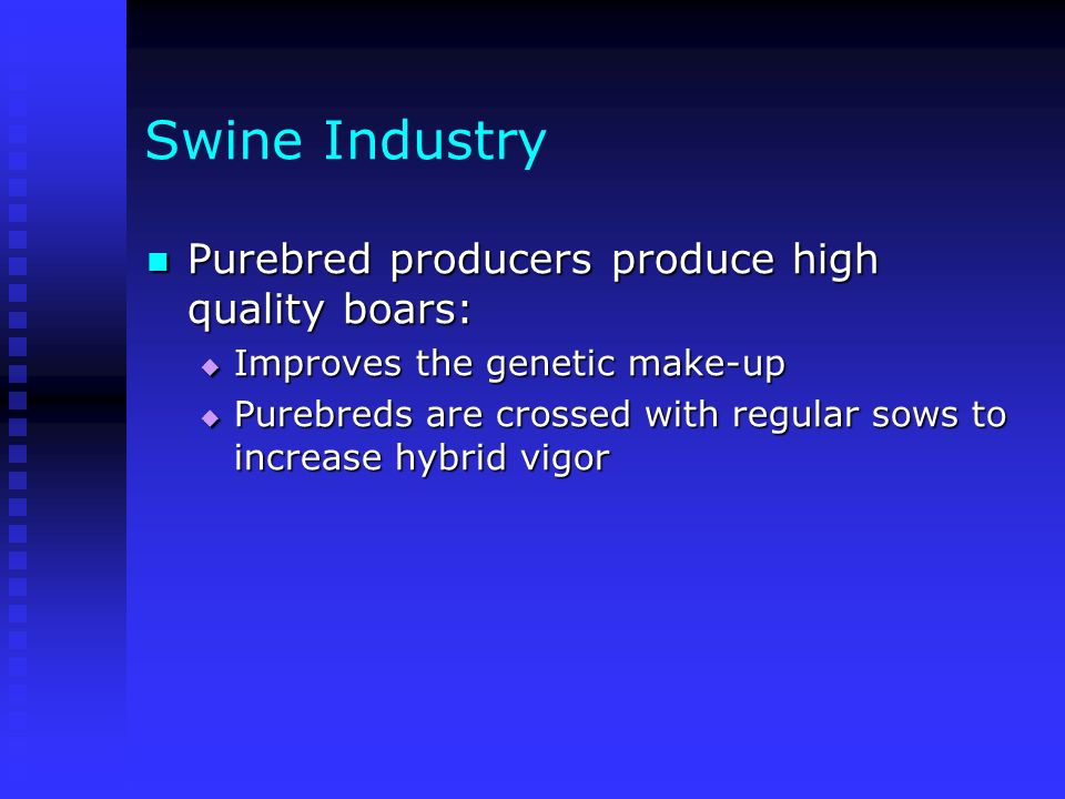 Swine Industry Purebred producers produce high quality boars: