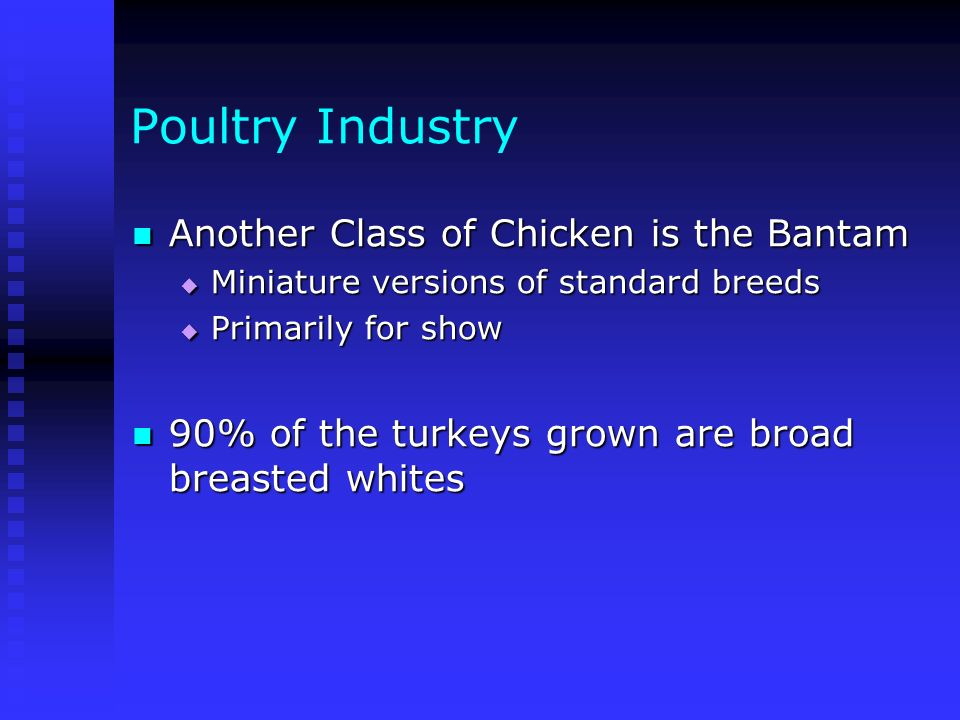 Poultry Industry Another Class of Chicken is the Bantam