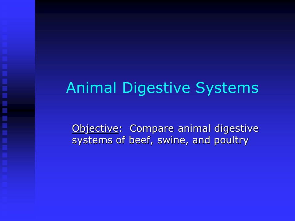 Animal Digestive Systems