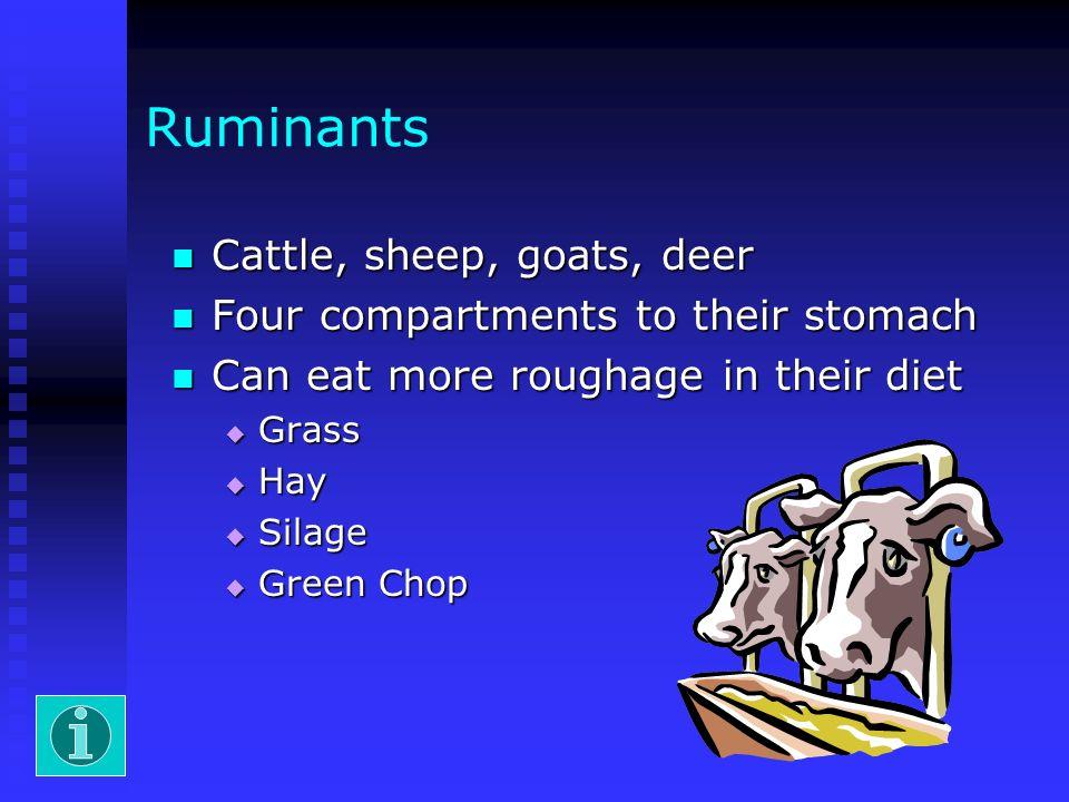 Ruminants Cattle, sheep, goats, deer