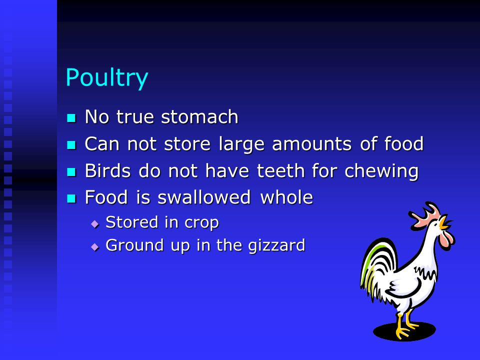 Poultry No true stomach Can not store large amounts of food