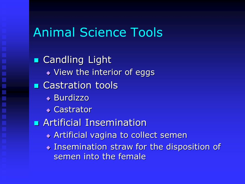 Animal Science Tools Candling Light Castration tools