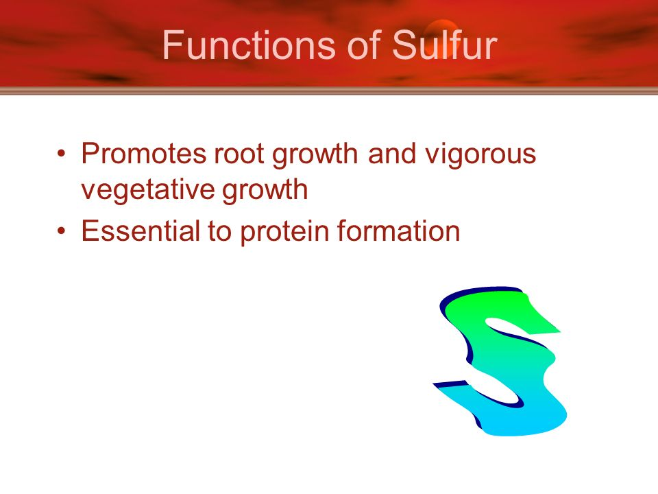 Functions of Sulfur Promotes root growth and vigorous vegetative growth. Essential to protein formation.