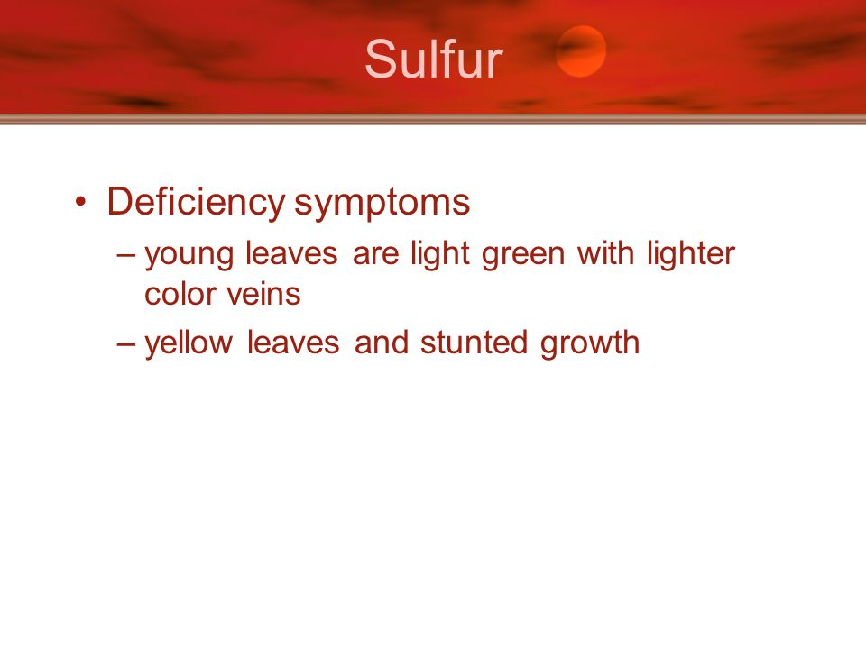 Sulfur Deficiency symptoms