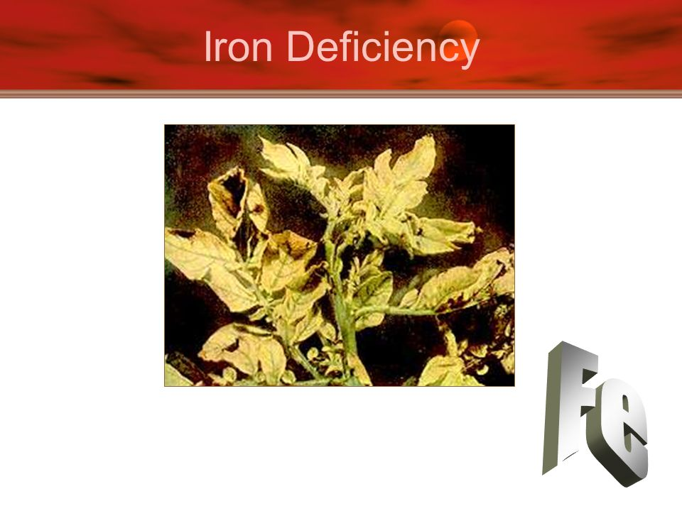 Iron Deficiency Fe