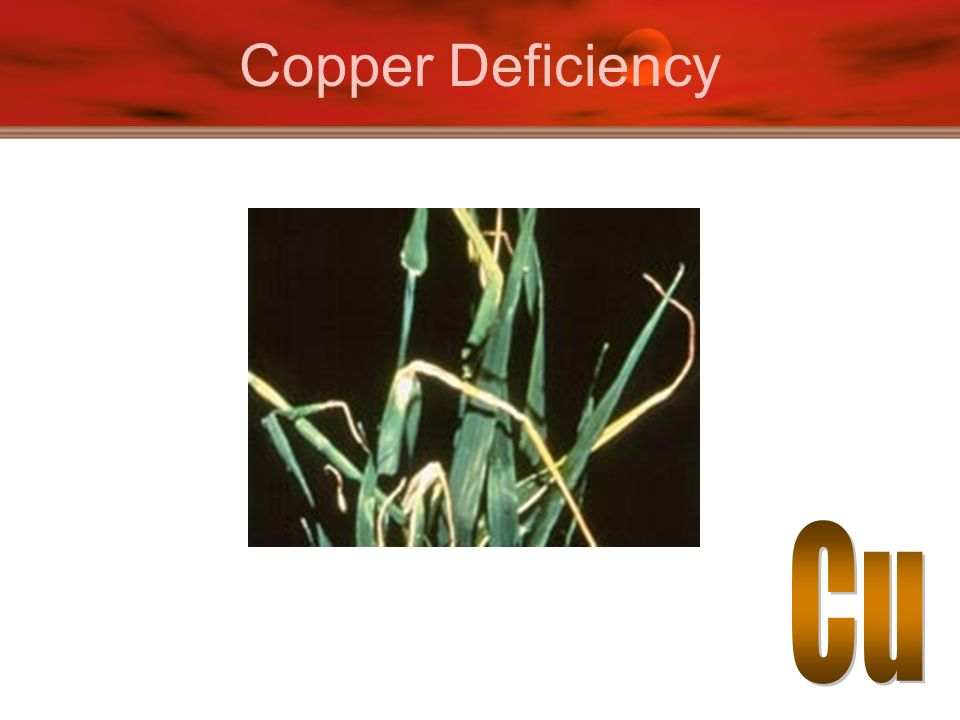 Copper Deficiency Cu