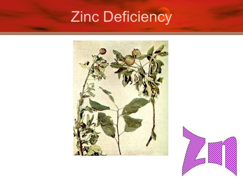 Soil nutrients and fertilizers ppt video online download for Soil zinc deficiency