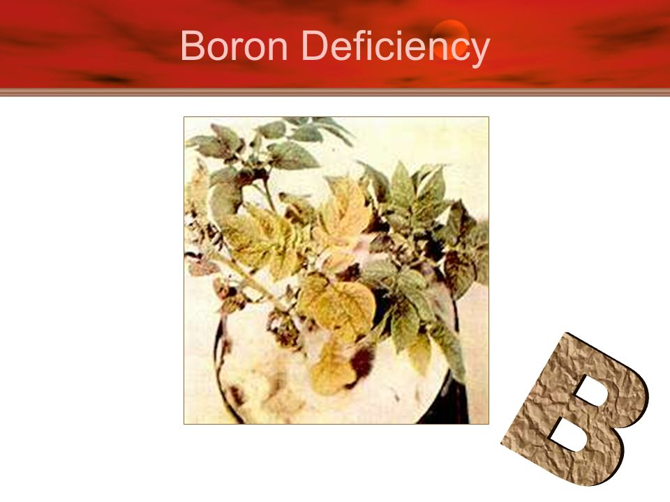 Boron Deficiency B