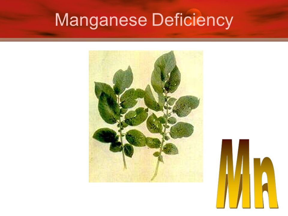 Manganese Deficiency Mn