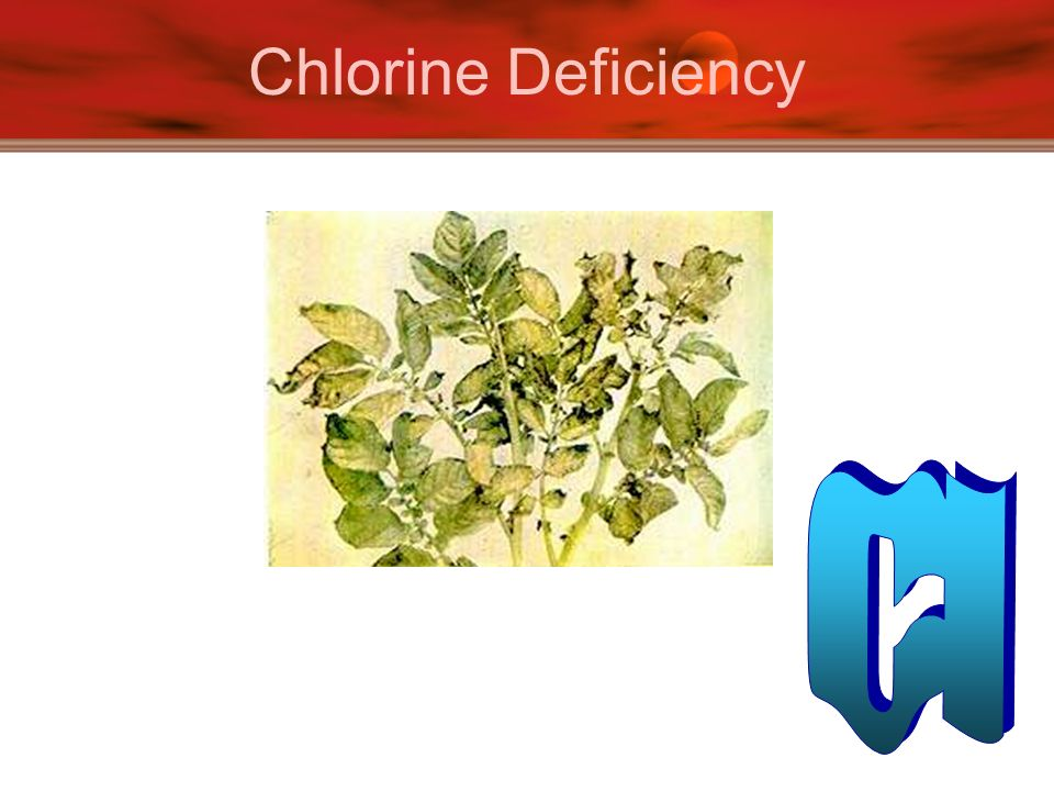 Chlorine Deficiency Cl