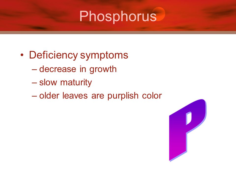 Phosphorus P Deficiency symptoms decrease in growth slow maturity