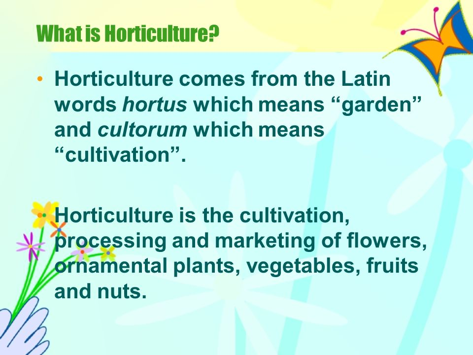 What is Horticulture Horticulture comes from the Latin words hortus which means garden and cultorum which means cultivation .