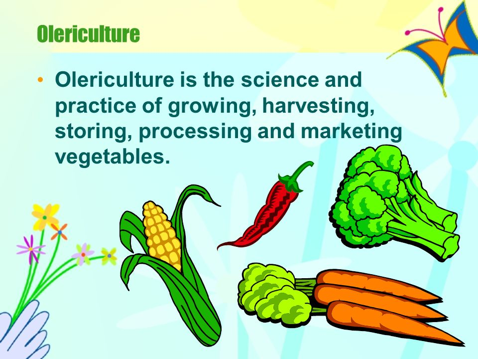 Olericulture Olericulture is the science and practice of growing, harvesting, storing, processing and marketing vegetables.