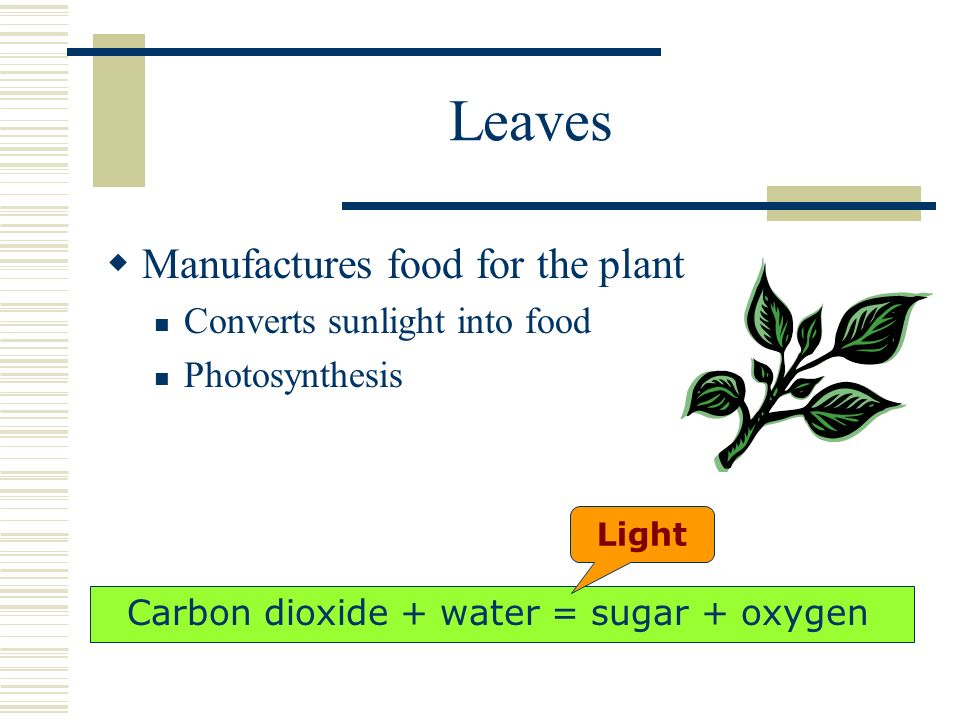 Carbon dioxide + water = sugar + oxygen