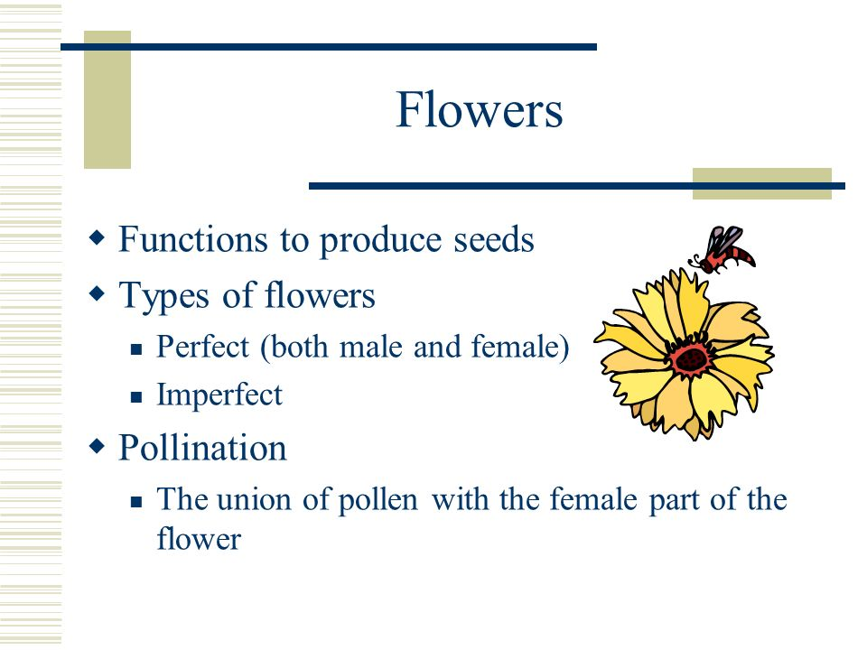 Flowers Functions to produce seeds Types of flowers Pollination