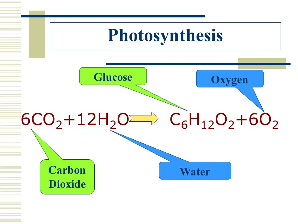 Photosynthesis 6CO2+12H2O C6H12O2+6O2 Glucose Oxygen Carbon Dioxide
