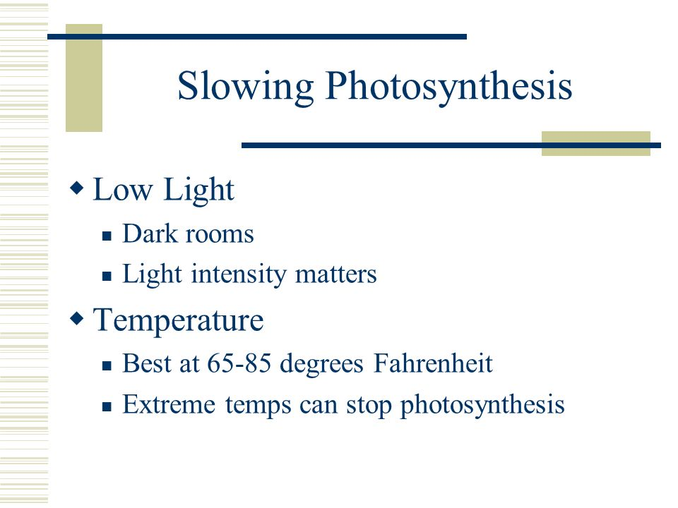 Slowing Photosynthesis
