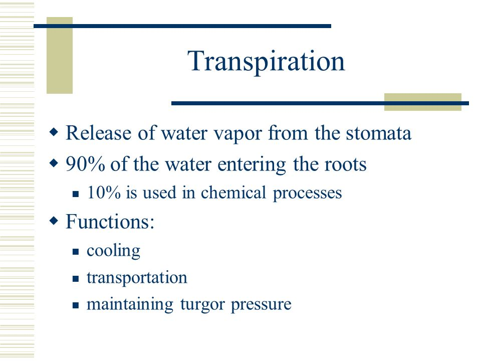 Transpiration Release of water vapor from the stomata
