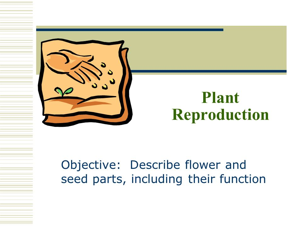 Plant Reproduction Objective: Describe flower and seed parts, including their function