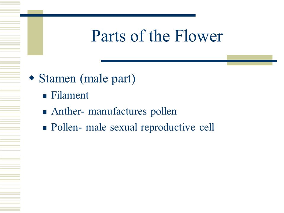 Parts of the Flower Stamen (male part) Filament
