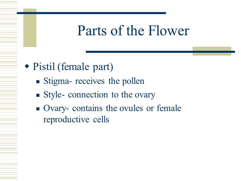 Parts of the Flower Pistil (female part) Stigma- receives the pollen