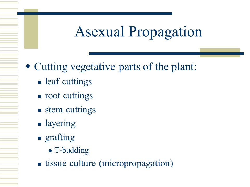 Asexual Propagation Cutting vegetative parts of the plant: