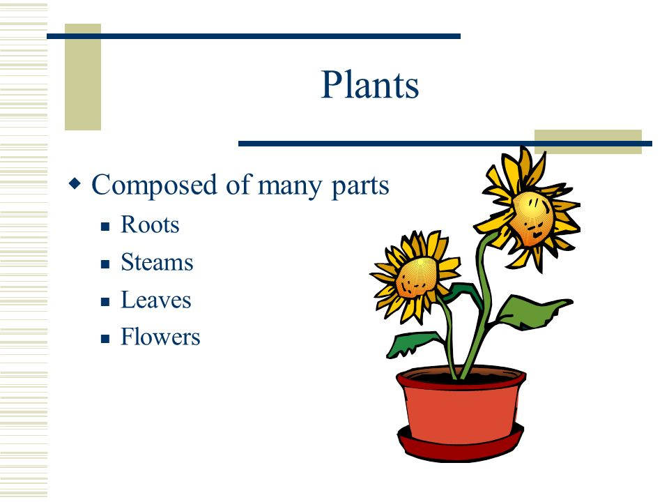 Plants Composed of many parts Roots Steams Leaves Flowers