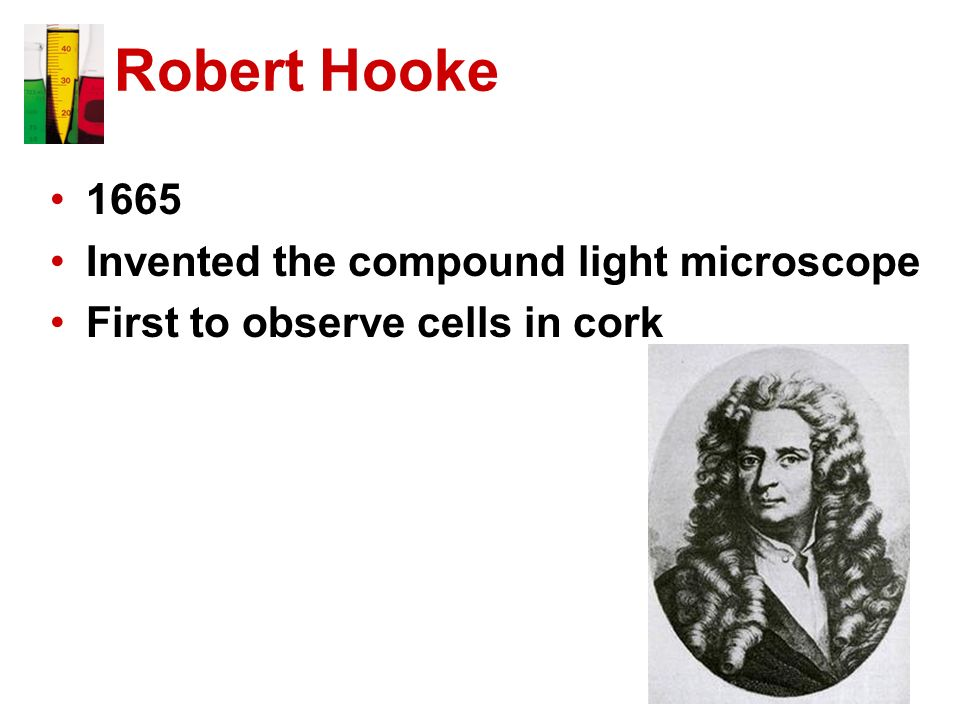 Robert Hooke 1665 Invented the compound light microscope