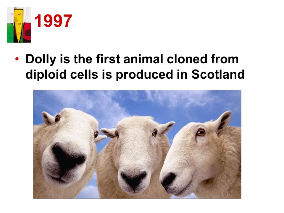 1997 Dolly is the first animal cloned from diploid cells is produced in Scotland