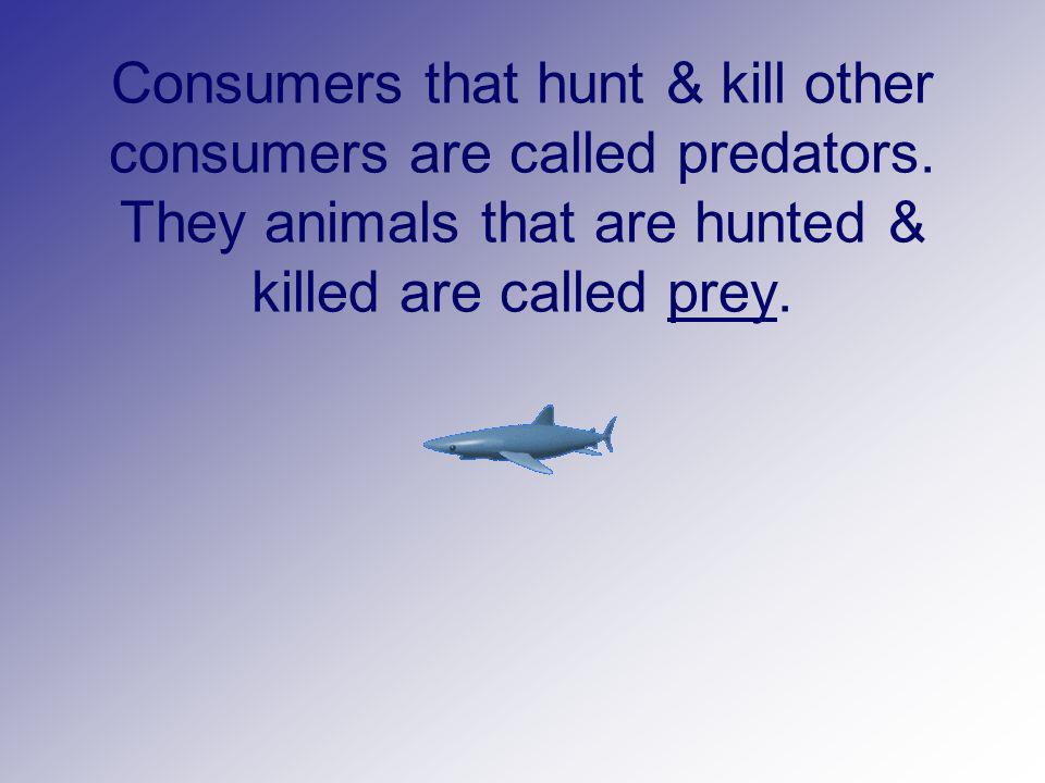 Consumers that hunt & kill other consumers are called predators