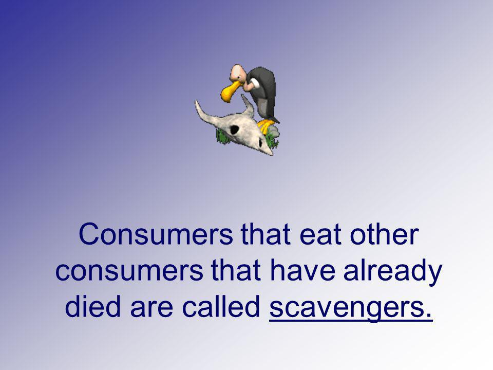 Consumers that eat other consumers that have already died are called scavengers.