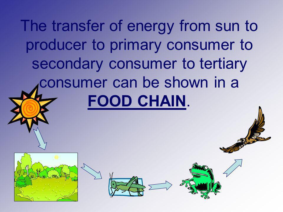 The transfer of energy from sun to producer to primary consumer to secondary consumer to tertiary consumer can be shown in a FOOD CHAIN.