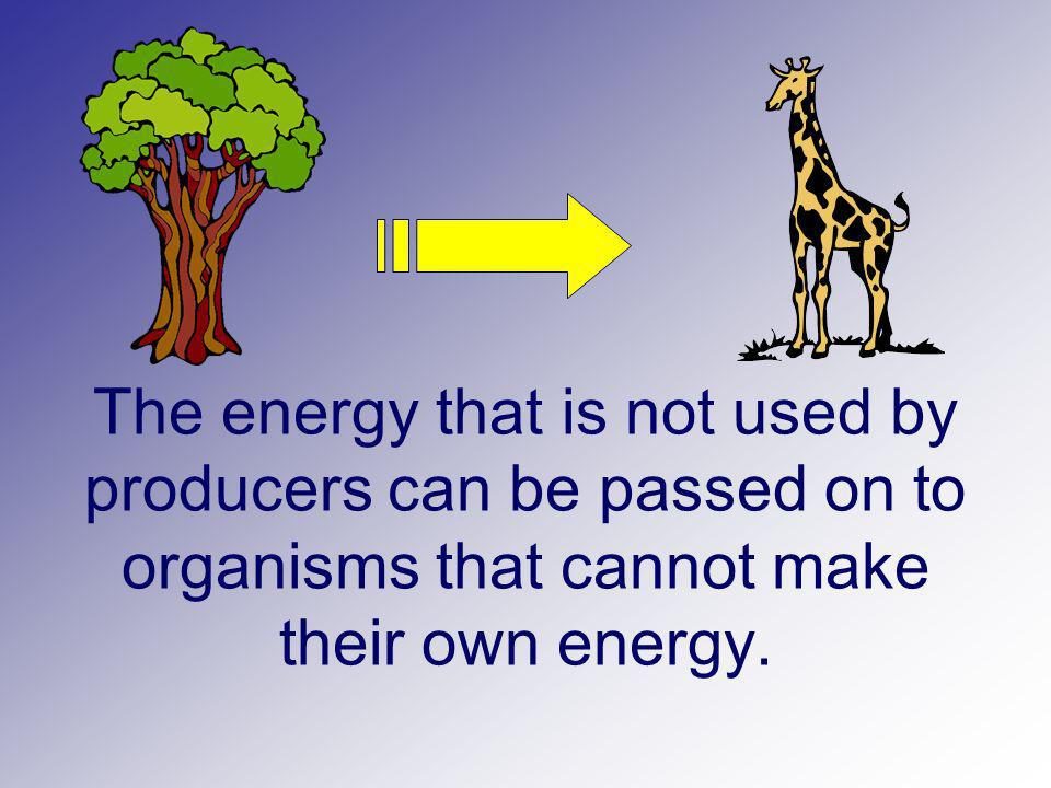 The energy that is not used by producers can be passed on to organisms that cannot make their own energy.