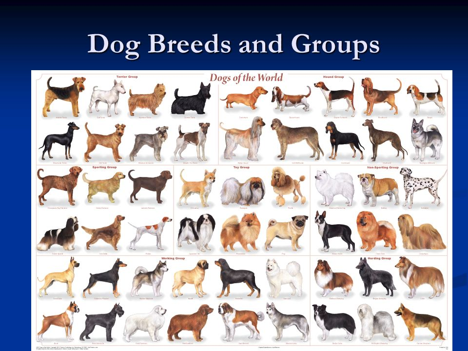 Dog Breeds and Groups