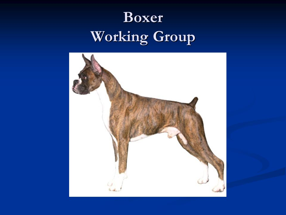 Boxer Working Group