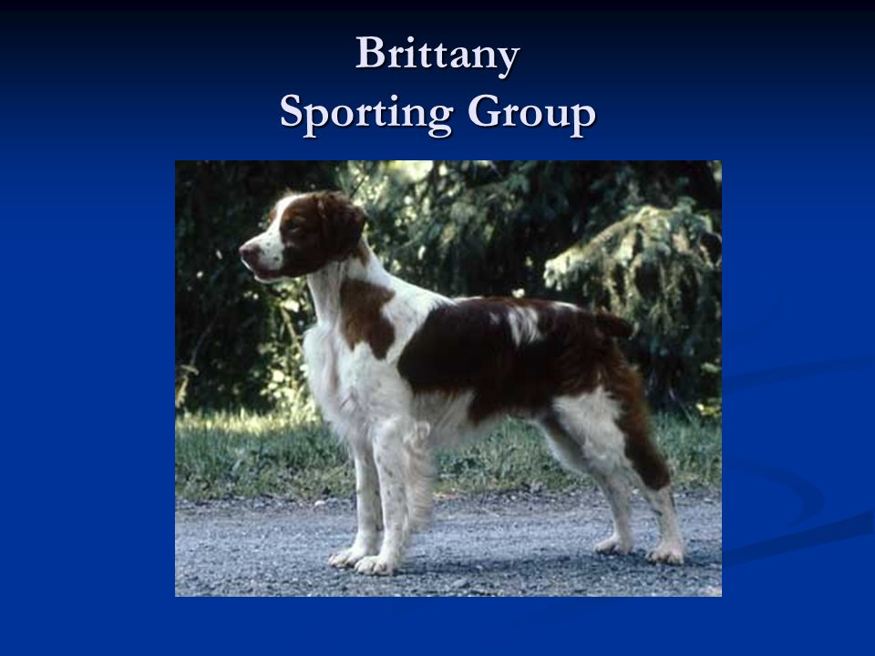 Brittany Sporting Group