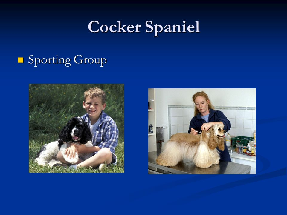 Cocker Spaniel Sporting Group