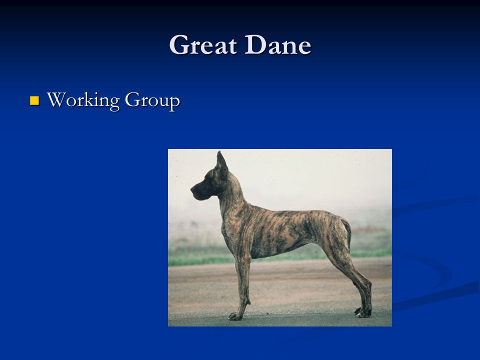 Great Dane Working Group