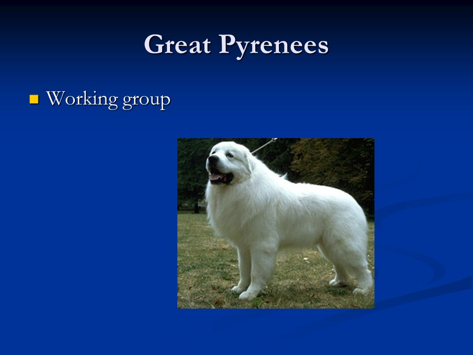Great Pyrenees Working group