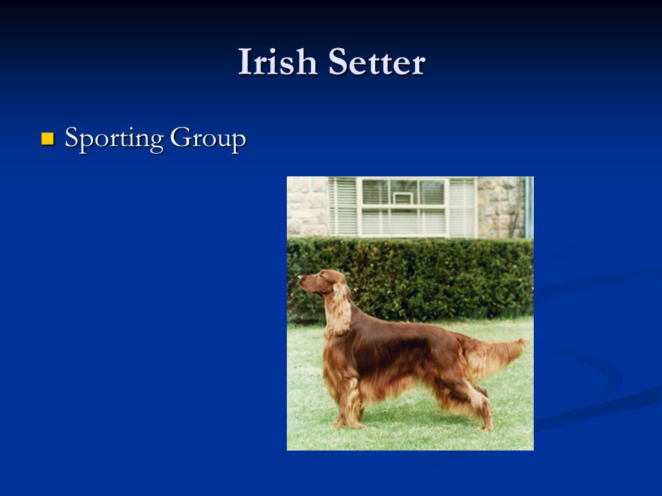 Irish Setter Sporting Group