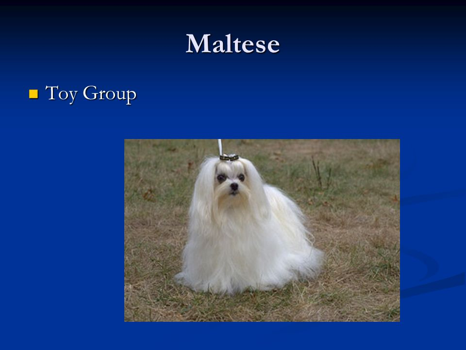 Maltese Toy Group