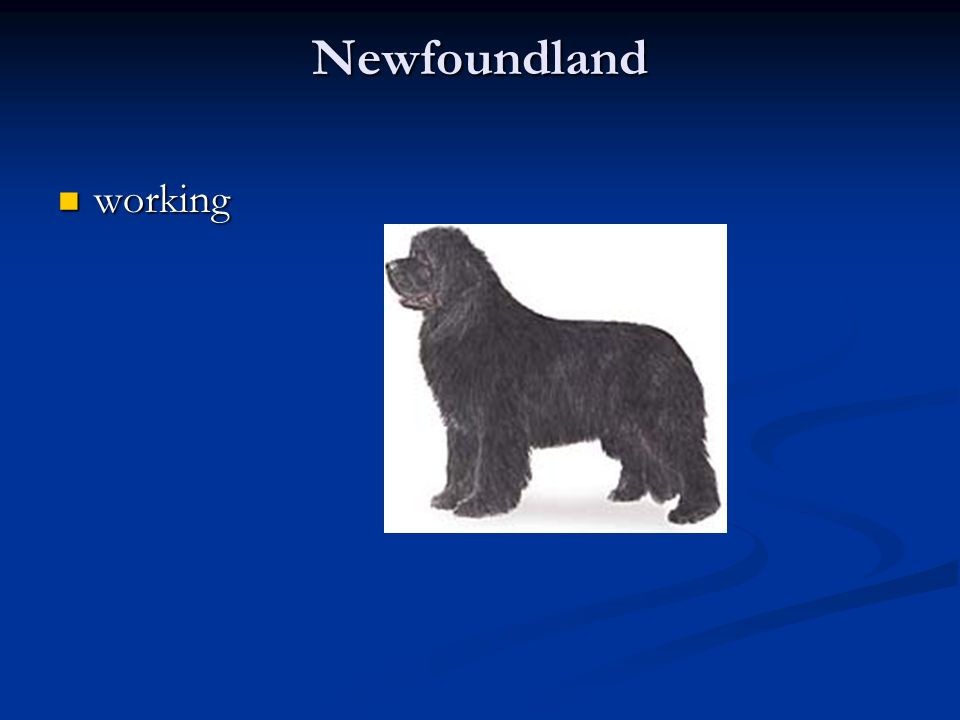 Newfoundland working