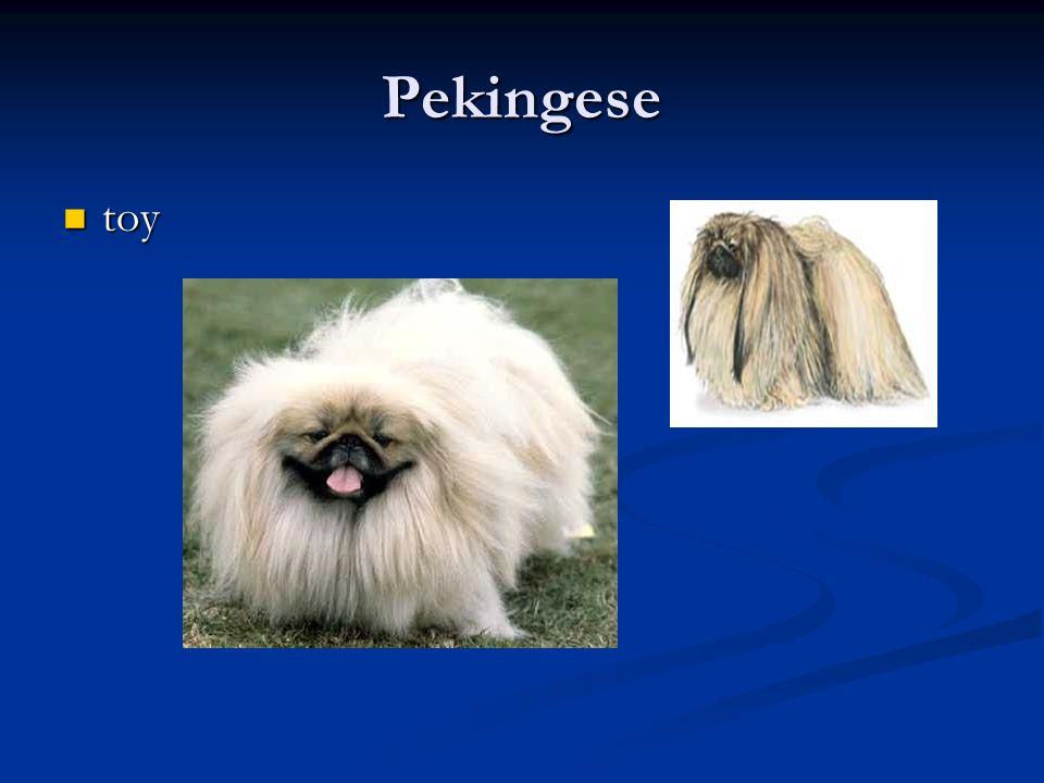Pekingese toy