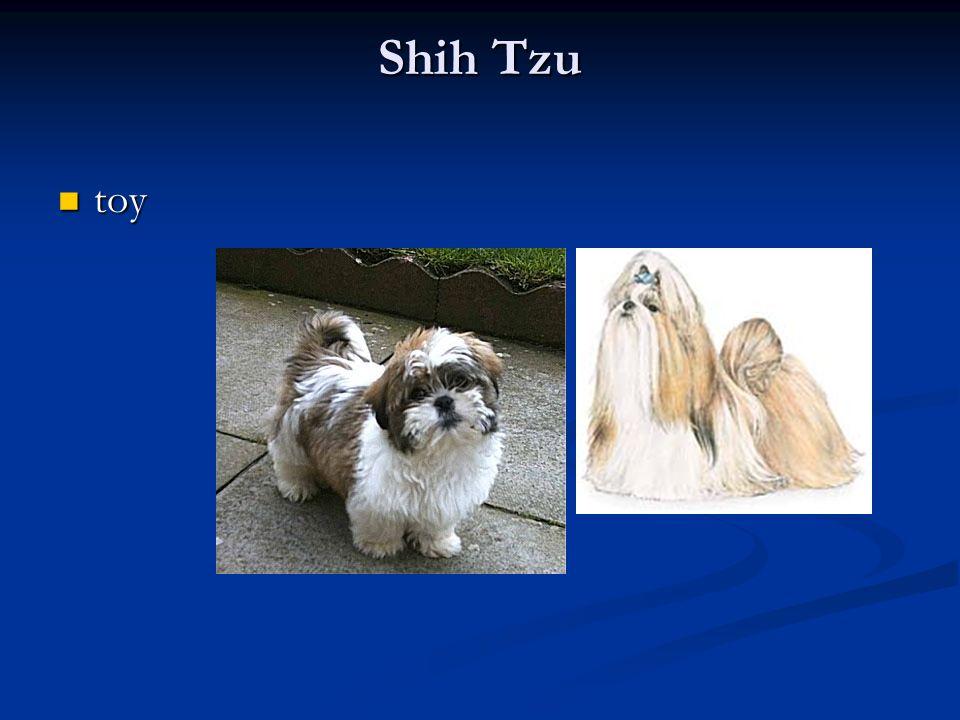 Shih Tzu toy