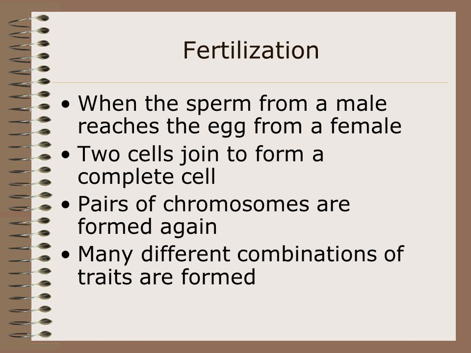 Fertilization When the sperm from a male reaches the egg from a female