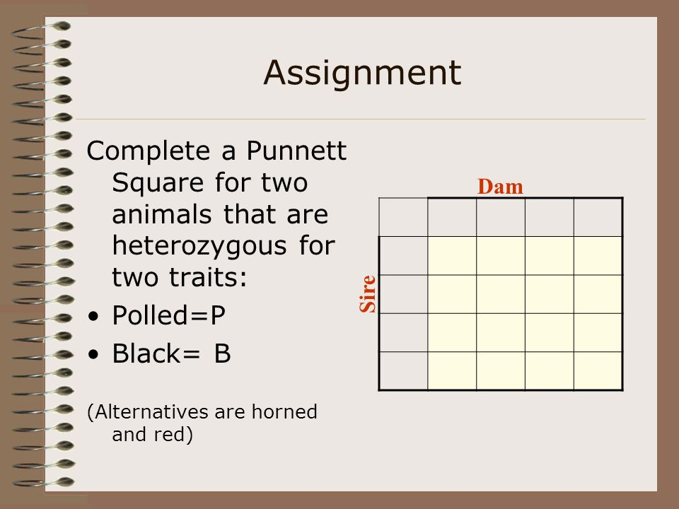 Assignment Complete a Punnett Square for two animals that are heterozygous for two traits: Polled=P.