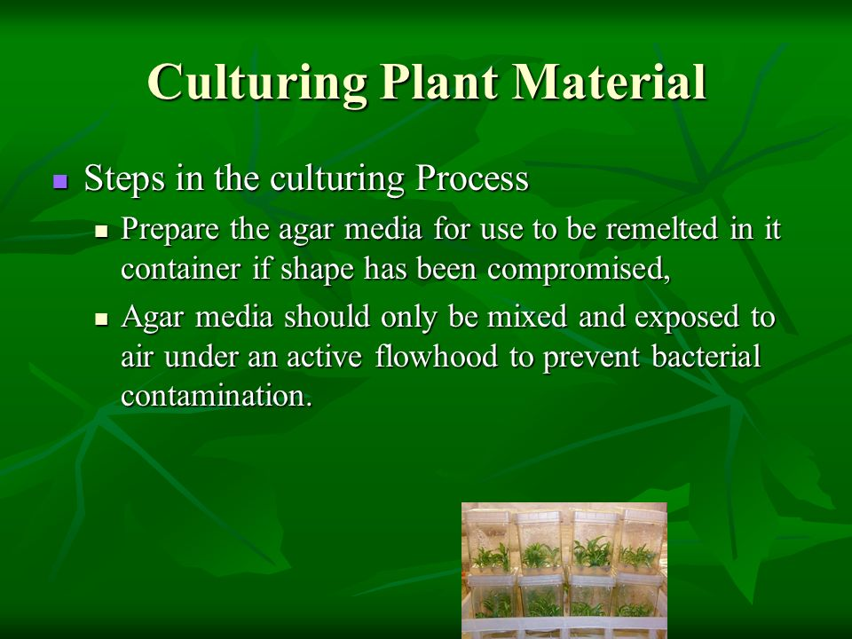 Culturing Plant Material