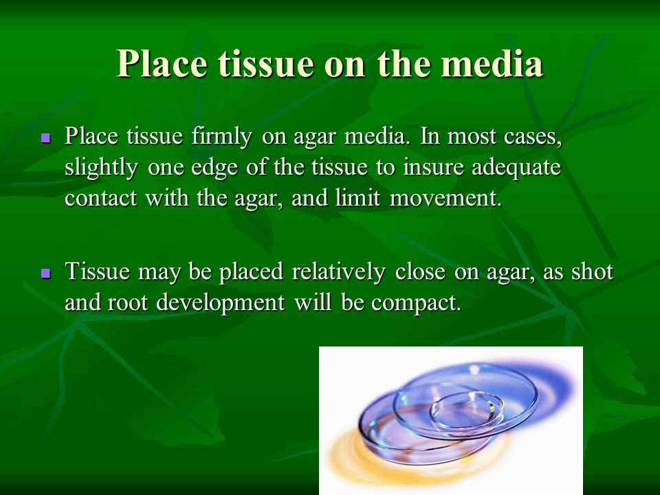 Place tissue on the media